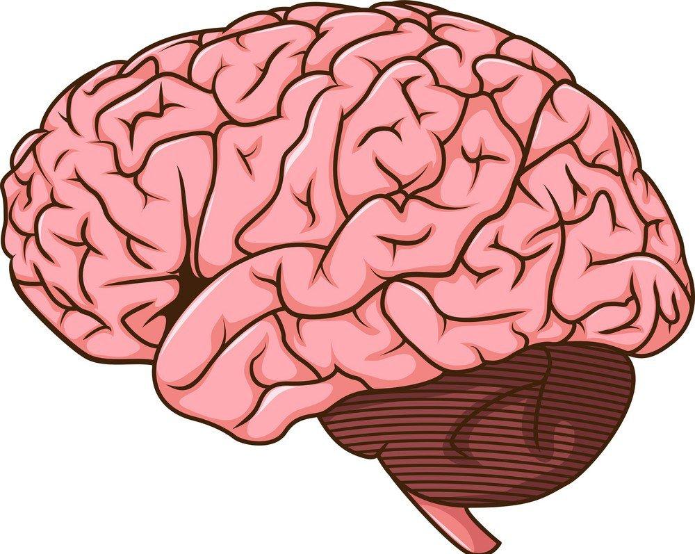 مغز ما قادر به انجام چند کار همزمان نیست