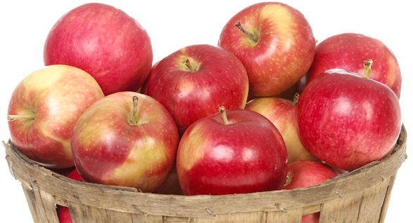 یک تولید کننده محتوا روزی 1 عدد سیب میخورد