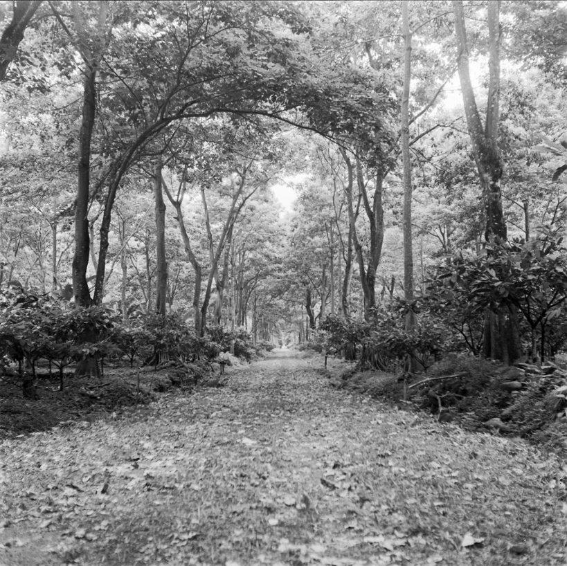 عکس سیاه و سفید در تولید محتوا New_Old_Stock