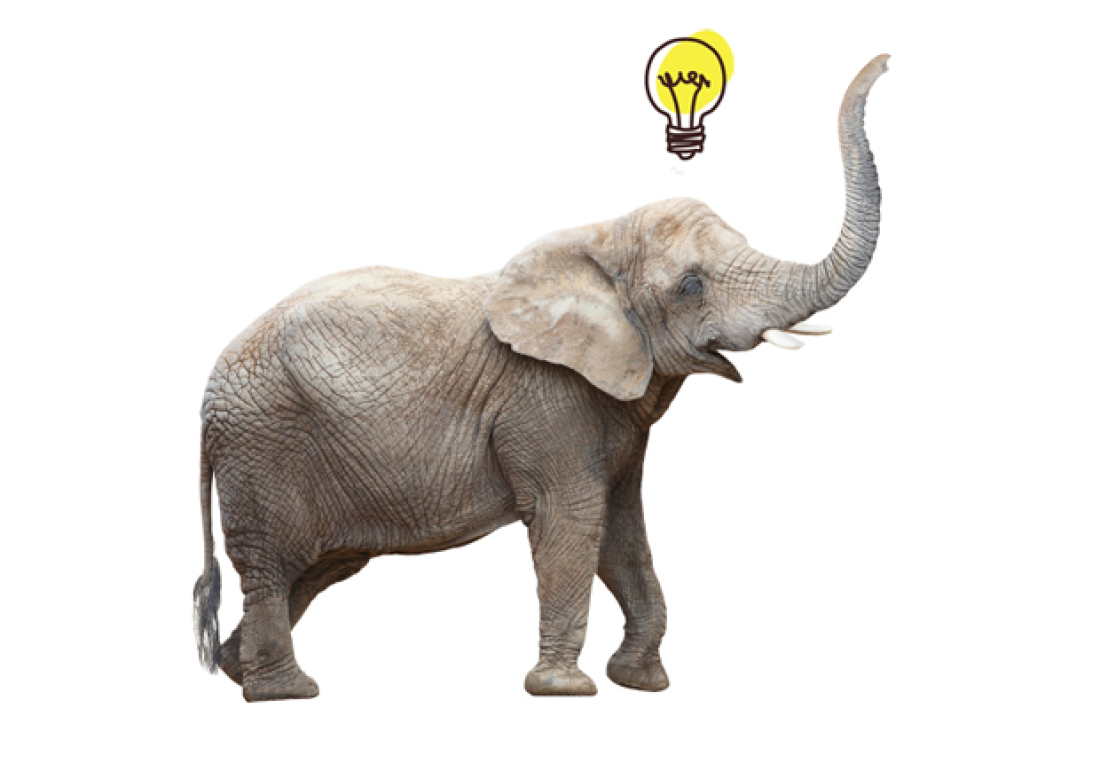 چرا گوریل ها و فیل ها نمی توانند تولید محتوا کنند ؟!